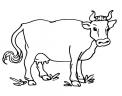 disegno manzetta da colorare..disegno vacca frisona italiana da colorare..disegno bufala razza mediterranea da colorare