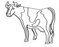 disegno mucca da latte per formaggio e mozzarella da colorare..disegno mucche in fattoria didattica da colorare..annutolo da colorare