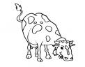 disegno vacca razza meticcia da colorare..disegno mucca da latte da colorare..disegno distributore latte da colorare