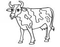 disegno vitello da latte da colorare..disegno mucca simpatica da colorare in fattoria didattica per tutti i bambini