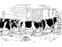 disegno sala di mungitura per le mucche..disegno mucche in mungitura da colorare