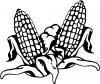 disegno mais o granoturco da colorare..disegno di cereali da colorare..disegno pannocchie da colorare..pianta di mais con chicchi per farina da colorare