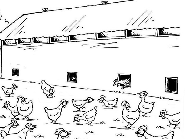 Disegno di un pollaio da colorare disegno di pollaio in for Interno di un pollaio