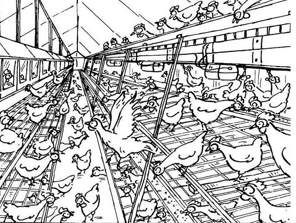 Disegno di pollaio nella fattoria didattica da colorare for Disegno della fattoria americana