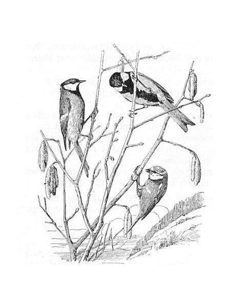 Uccellini Da Disegnare Good Biscotto Natale Disegno Clicca Qui Per