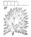 disegno pavone da coloraredisegno pavone con ruo