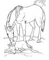 disegno giumenta con puledro da colorare..disegno cavalla con cavallino da colorare..disegno pony da colorare