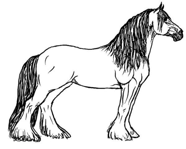 Disegno stallone da colorare disegno cavallo da tiro da for Disegno cavallo per bambini