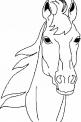 disegno di testa di cavallo da colorare..cavallo con criniera da colorare..disegno cavallo baio da colorare..pony da colorare