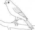 disegno uccellino da colorare..disegno passero da colorare..disegno pettirosso da colorare