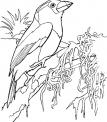 disegno uccello da colorare..disegno canarino da colorare..disegno uccellino nel nido da colorare