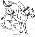 disegno mulo da colorare..disegno bardotto da colorare..disegno mulo che scalcia da colorare