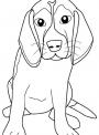 disegno cane di razza da colorare..disegno cane da guardia da colorare..diisegno cane da caccia da colorare