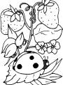 disegno coccinella sul prato della fattoria da colorare..disegno coccinella sui frutti del frutteto in fattoria da colorare