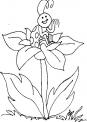 disegno coccinella sulla verdura dell'orto in fattoria da colorare..disegno larva di insetto coccinella da colorare