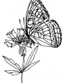 disegno farfalla da colorare..disegno farfallina sui fiori nel prato da colorare..disegno farfallina che vola da colorare
