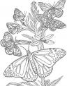 disegno gruppo di farfalle mentre volano insieme da colorare..disegno farfalla che succhia un fiore da colorare
