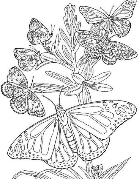 Disegno gruppo di farfalle mentre volano insieme da for Disegni da colorare per adulti paesaggi
