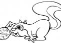 disegno scoiattolo con noci e noccioline da colorare..disegno scoiattolino nella tana da colorare