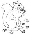 disegno scoiattolo in letargo da colorare..disegno scoiattolo che mangia le noci da colorare in fattoria