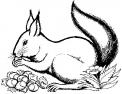 disegno scoiattolo che salta sulla pianta da colorare..disegno scoiattolo che dorme in letargo da colorare