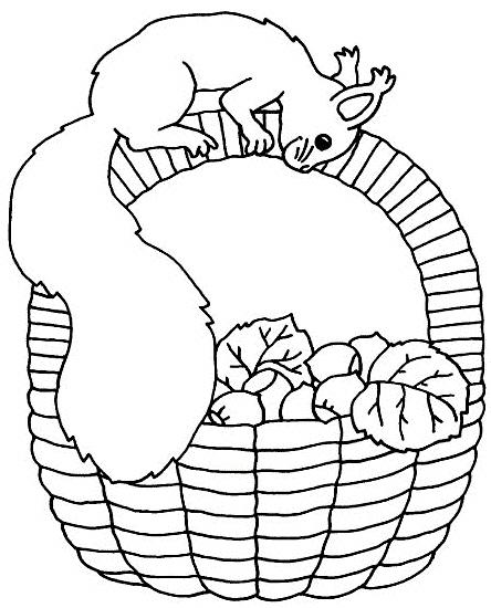 Disegno scoiattolo americano da colorare disegno cip e for Cip e ciop immagini da colorare