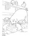 disegno maialini in fattoria da colorare..disegno scrofa con maialini da colorare..porcelli da colorare