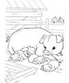 disegno suinetti con suino da colorare..disegno maiale e maialini da colorare..verro da colorare