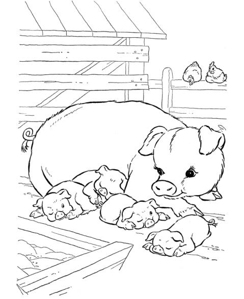 disegno suinetti con suino da colorare ... : 塗り絵 動物 : すべての講義