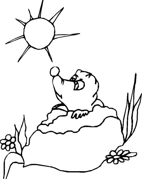 Disegno pipistrello da colorare disegno talpa da colorare for Immagini talpa