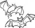 disegno pipistrello da colorare..disegno pipistrelli che volano da colorare pipistrello mammifero volante da colorare