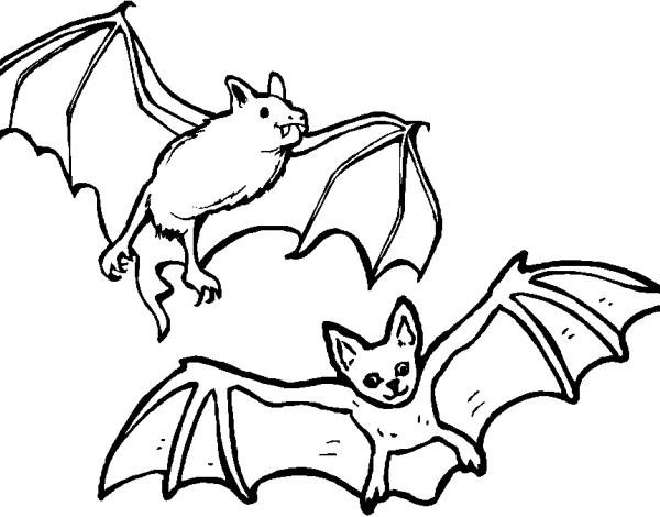 Disegni Da Colorare Pipistrelli.Disegno Pipistrello Da Colorare Disegno Pipistrelli Che Volano Da Colorare Pipistrello Mammifero Volante Da Colorare