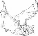disegno pipistrello nella grotta da colorare..disegno pipistrello nella notte che vola da colorare