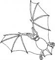disegno pipistrello a caccia di insetti da colorare..disegno pipistrello utile all'agricoltura da colorare..disegno pipistrello in letargo da colorare