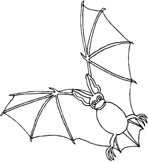 Disegno Pipistrello Da Coloraredisegno Talpa Da Colorare