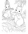 disegno di coniglio da colorare..immagine di coniglietti da colorare..coniglia con coniglietti da colorare in fattoria