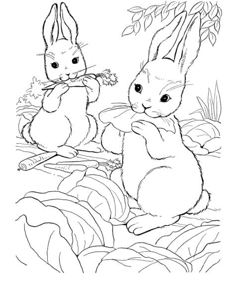 Disegno di coniglio da colorare immagine di coniglietti for Coniglio disegno per bambini