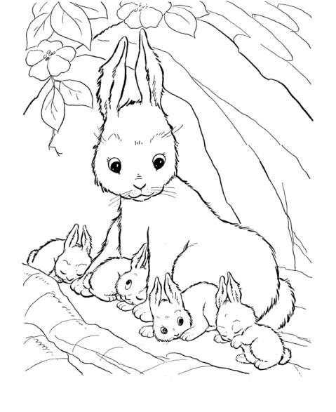 Disegno Coniglio Da Coloraredisegno Lepre Da Colorare