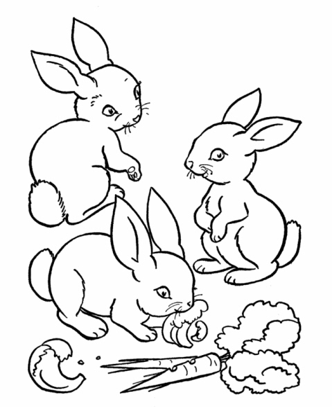 Disegno di coniglio selvatico da colorare disegno for Coniglio disegno per bambini