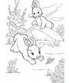 disegno coniglio che salta da colorare..disegno minilepre e lepre da colorare..coniglia con piccoli coniglietti da colorare