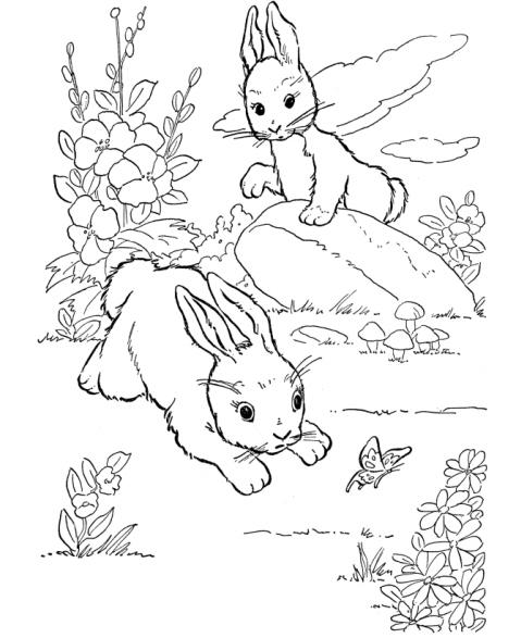 Disegno coniglio che salta da colorare disegno minilepre for Lepre immagini da stampare
