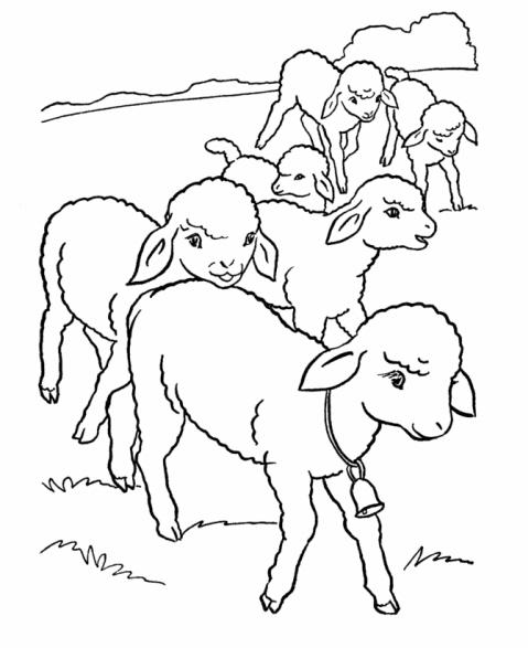 disegno agnelli da coloraredisegno agnellini che
