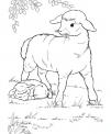disegno pecora con agnello da colorare..disegno agnellino appena nato da colorare..pecorella agnellino da colorare