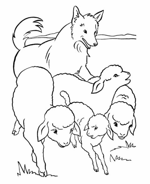 Disegno Pecore Con Cane Da Pastore Da Colorare Disegno