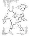 disegno di capretti da colorare..disegno di capre con capretti da colorare..becco o caprone da colorare