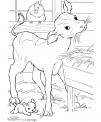 disegno vitello da colorare..disegno vitellino che beve il latte da colorare..manza da colorare