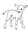 disegno annutolo da colorare..disegno vitello nato dalla mucca da colorare..bufala da colorare