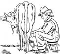 disegno mungitura mucca da colorare..disegno mungitura bufala da colorare..mammella di mucca latte da colorare