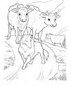 disegno mucche al pascolo da colorare..disegno mucche con cane pastore da colorare..vacche al pascolo in montagna da colorare