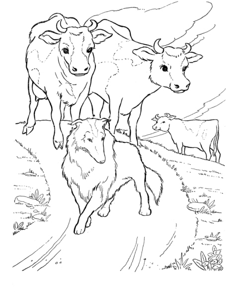 horses herding cattle coloring pages - photo#2